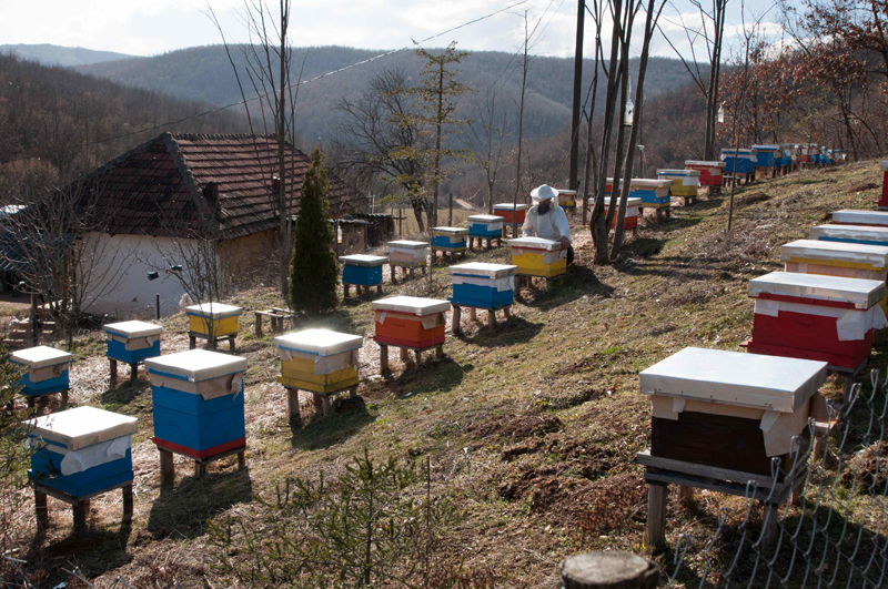 Gëzim Gjuri - In 2012, Gëzim Gjuri decided to return voluntarily to Kosovo. He applied for IOM's AVRR programme and was granted a business grant as reintegration assistance to help his beekeeping enterprise, which consisted of only seven bee houses prior to migration. Since then he has used the grant to expand his previously owned, but then unprofitable, beekeeping business.