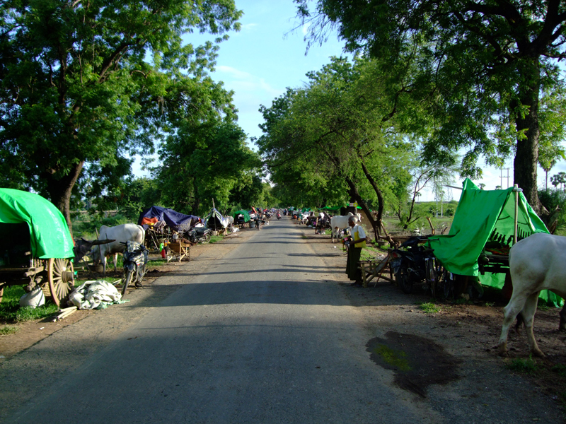 People displaced by floods living in makeshift shelters along the main road in Salingyi Township, Sagaing. More thann 333,000 people have been displaced in the country (11 Aug). © IOM 2015