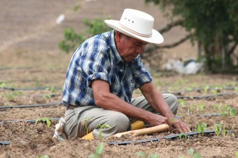 L'OIM Colombie apporte un soutien aux victimes du conflit armé colombien depuis 2001. La création de revenus a été un élément crucial pour assurer leur survie économique. Photo : © OIM 2004