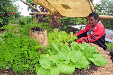 "Antonio Duarte, Chief of Ariana sub-village in Bobonaro District, Timor-Leste  is delighted with the results of his ""keyhole garden"". © IOM 2013"
