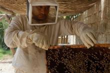 Idriss Najehl es más feliz ahora que es apicultor que cuando trabajaba de taxista en su pueblo, Abu Khanazeer, en la provincia de Diyala.  A principios de 2011, en el marco de un programa de seguridad y estabilización humanitaria, fue seleccionado por la OIM como beneficiario de una subvención en especie. © OIM