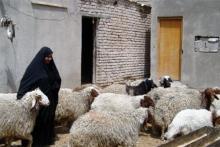 """""""Al poco, ya no sufría al ocuparme de los animales, sino que me consolaba. Pronto empecé a sentirme orgullosa de llevar mis ovejas al mercado y venderlas,"""" afirma Zaina."""