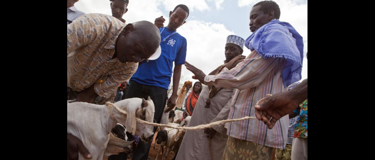 IOM purchased 500 emaciated goats and sheep from host community families. The proceeds from the sales will meet their immediate, life-saving needs and the meat will be used to supplement their diets. © IOM 2011 (Photo: Brendan Bannon)