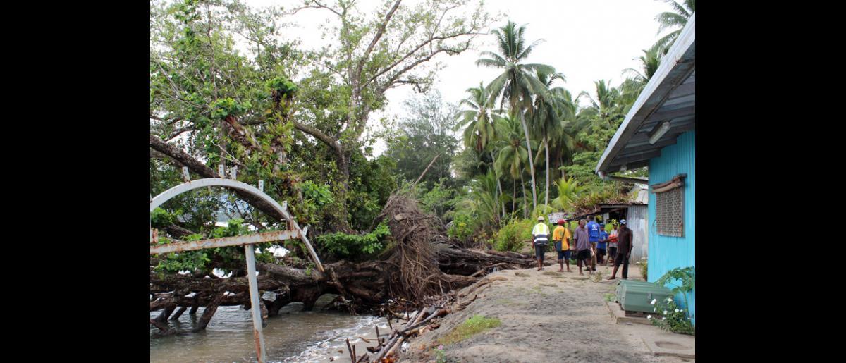 Encore une disparition : Ces arbres centenaires qui, à l'origine, se trouvaient à 200 mètres du rivage, ont pratiquement disparu à Lagui, sur la côte septentrionale de la Papouasie Nouvelle Guinée. Avec le soutien d'USAID, l'OIM aide cette communauté à prendre des décisions sur la manière de s'adapter au changement climatique, y compris sur l'éventualité de déplacer le village dans son entier. © OIM 2014 (Photo de Joe Lowry)