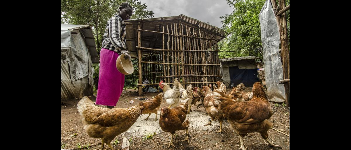 Sunday, host community member and livelihood beneficiary, feeds the chickens she received from IOM in Jewi, Gambella.