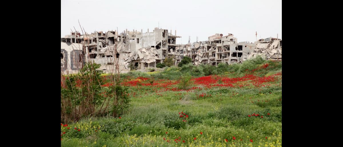 A field of flowers announcing spring next to the destroyed city of Homs. Phot: IOM/Batoul Ibrahim 2016